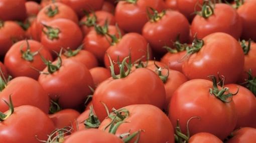 tomatoes1-thumb-550xauto-104683